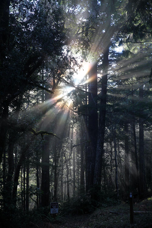 """In Kalifornien ist selbst das Waldlicht ein bisschen """"New Age""""."""