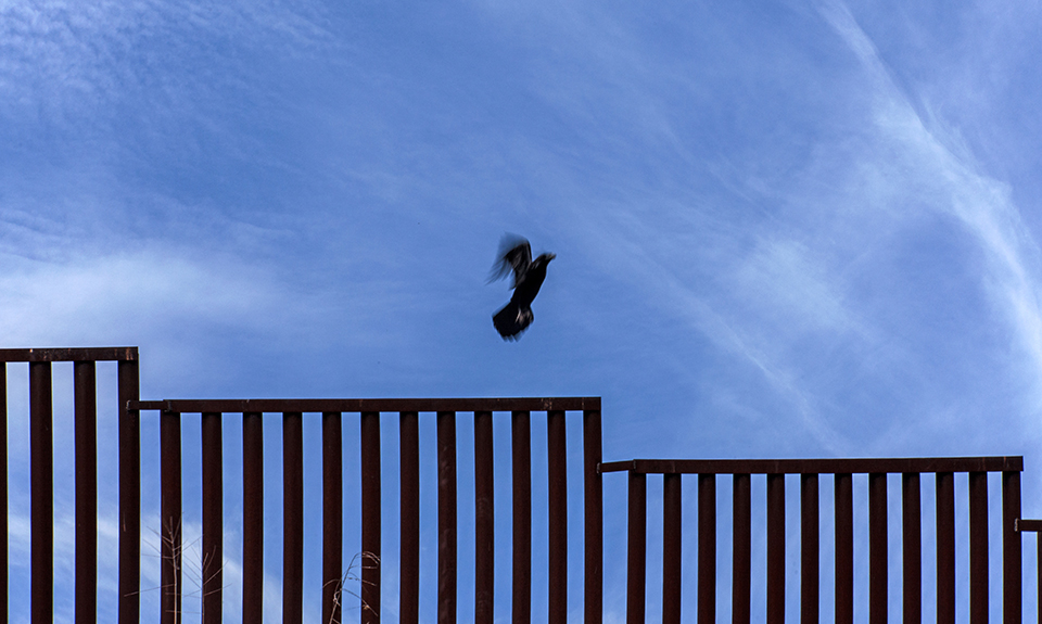 Not to be stopped: A dove flies over the US-Mexican border that was built after 9-11.